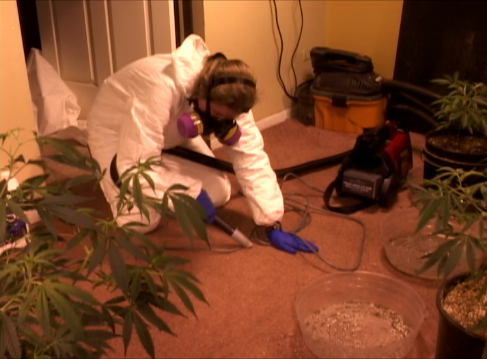 Health hazards of indoor pot grows