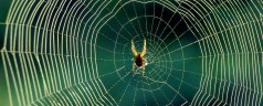 Avoid Charlotte's Web for epilepsy